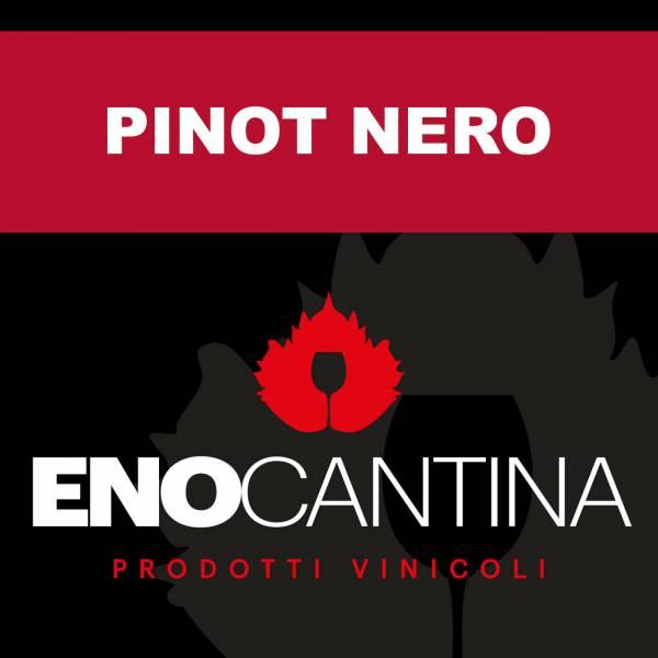 pinot-nero